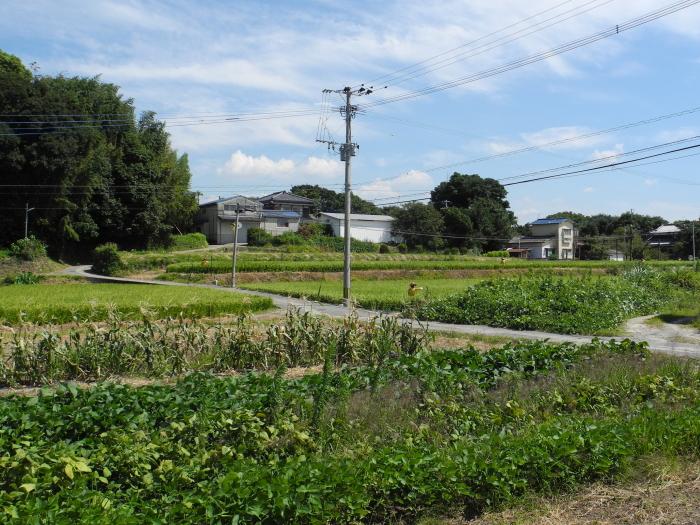higashi015913.jpg
