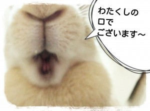 15-11-28-08-28-04-770_deco.jpg