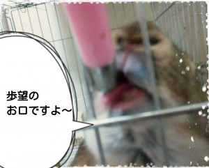 15-11-28-08-38-35-777_deco.jpg