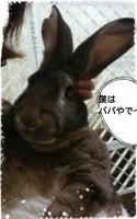15-12-06-11-02-39-958_deco.jpg