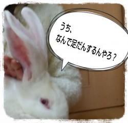 16-02-21-09-23-03-694_deco.jpg