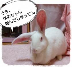 16-04-04-18-02-55-198_deco.jpg