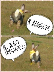 16-04-17-16-31-52-833_deco.jpg