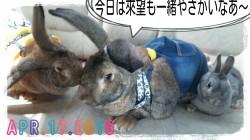 16-04-17-16-37-04-048_deco.jpg