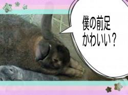 16-04-29-20-53-27-339_deco.jpg