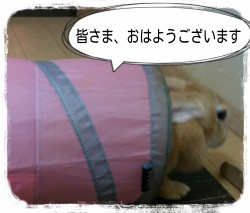 16-08-12-07-43-52-613_deco.jpg