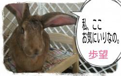 16-09-11-12-23-00-726_deco.jpg