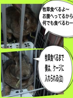 2014-08-20-09-40-59_deco.jpg