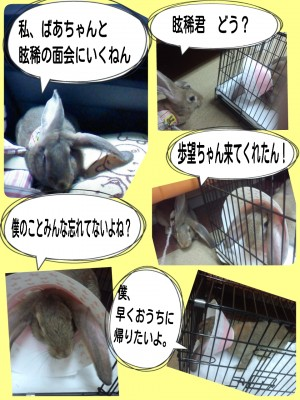 2014-09-11-20-48-10_deco.jpg