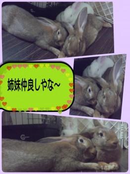 2014-09-25-00-09-34_deco.jpg