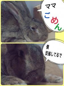 2014-10-01-10-39-40_deco.jpg