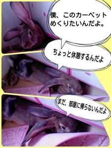 2014-10-02-16-33-04_deco.jpg