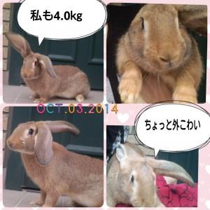 2014-10-03-15-57-09_deco.jpg
