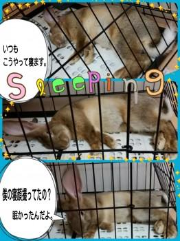 2014-10-06-11-39-52_deco.jpg
