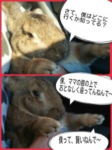 2014-10-25-19-44-03_deco.jpg
