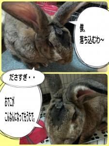 2014-11-02-14-52-07_deco.jpg