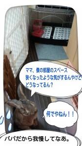 2014-11-08-11-12-04_deco.jpg