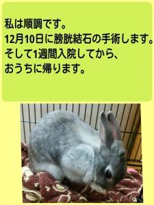 2014-11-23-13-08-43_deco.jpg