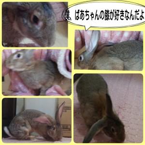 2014-12-06-15-42-36_deco.jpg