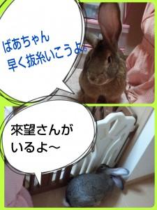 2015-01-04-09-53-24_deco.jpg