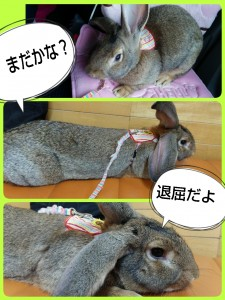 2015-01-04-09-57-04_deco.jpg