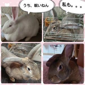 2015-02-01-13-45-57_deco.jpg