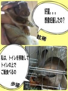 2015-02-05-07-13-17_deco.jpg