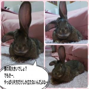 2015-02-13-07-14-43_deco.jpg