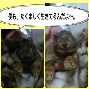 2015-03-05-08-26-50_deco.jpg