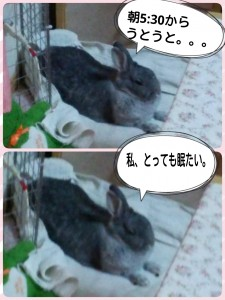 2015-03-06-12-22-16_deco.jpg