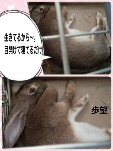 2015-04-19-16-18-15_deco.jpg