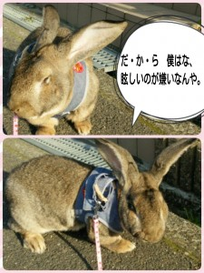 2015-04-29-17-09-55_deco.jpg
