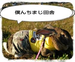16-03-26-17-40-59-792_deco.jpg