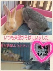 16-03-26-22-35-53-254_deco.jpg