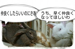 16-04-19-20-04-42-538_deco.jpg