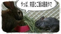 16-05-13-07-17-03-473_deco.jpg