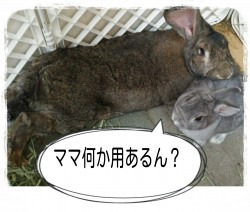16-06-02-20-46-29-701_deco.jpg