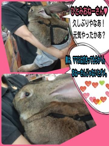 2014-08-22-12-04-23_deco.jpg