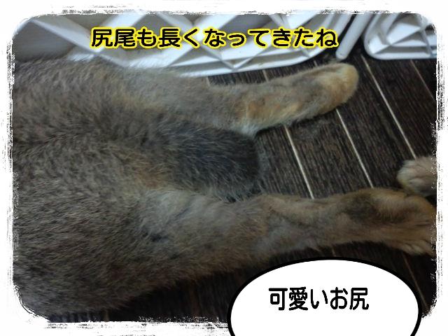 2014-08-28-07-40-56_deco.jpg
