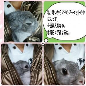 2014-12-07-11-31-57_deco.jpg