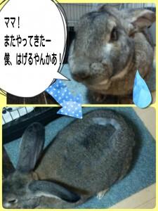 2015-01-24-22-49-39_deco.jpg