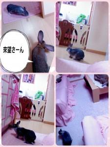 2015-02-06-22-57-01_deco.jpg