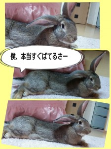 2015-02-06-23-03-20_deco.jpg