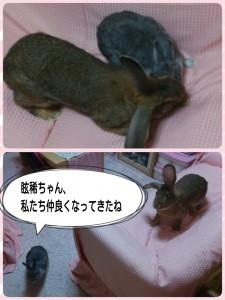2015-02-13-07-11-18_deco.jpg