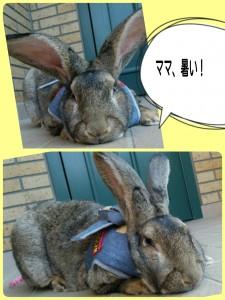 2015-04-29-17-13-01_deco.jpg