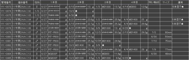 Y11中原02